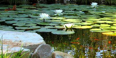"""Képtalálat a következőre: """"kerti tó kép"""""""